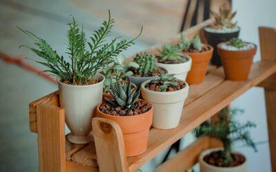 Gør planter til en aktiv del af din bolig